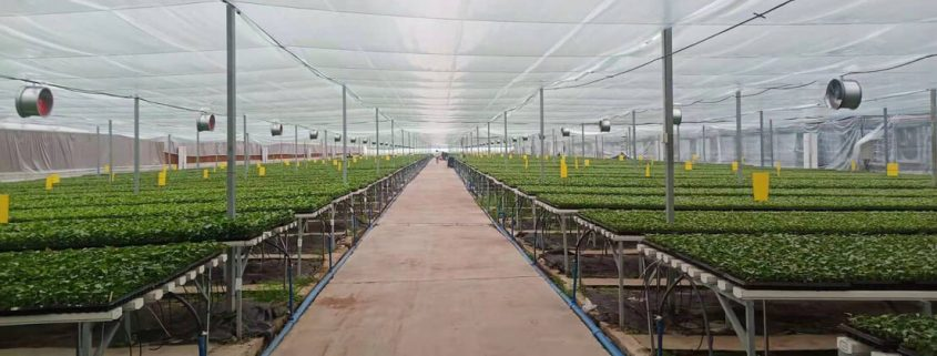 large scale greenhouse ventilation, large scale greenhouse cooling