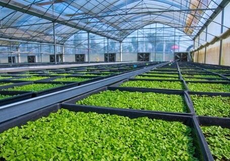 greenhouse-ventilation-fan-845x600-landscape
